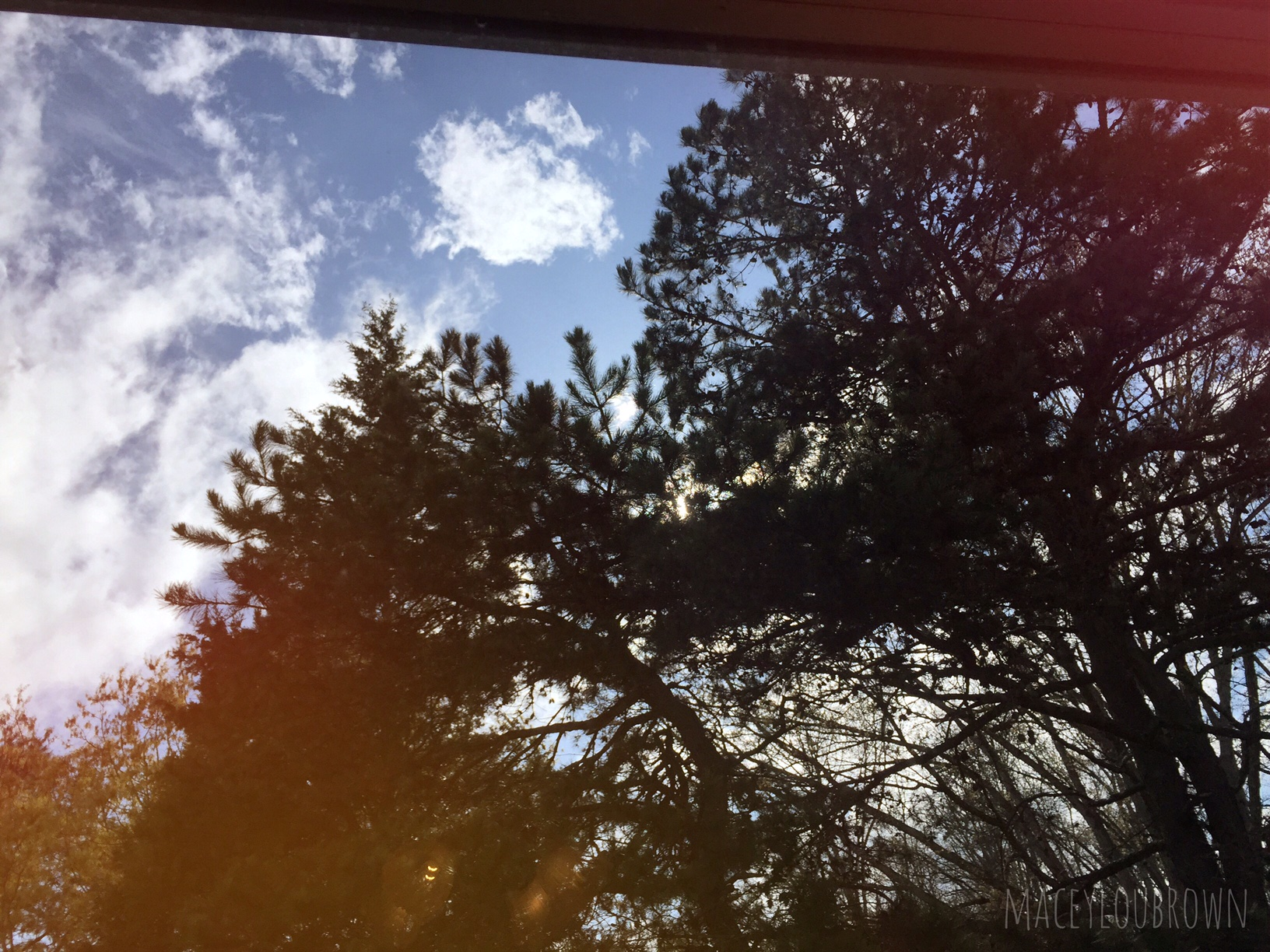 The beautiful trees right outside my studio window. They live in my neighbors forest of a yard. Love it. <3