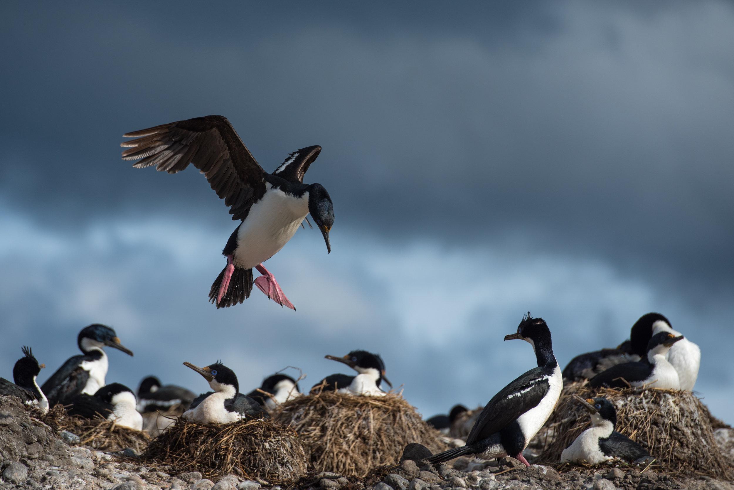 Tucker Islets, Chilean Patagonia
