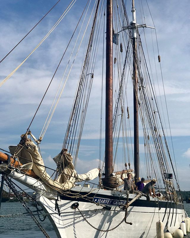 We're on our way to Rockland for our first-ever adult #birdwatching voyage, cohosted with the Biodiversity Research Institute and @sailingshipsmaine. We're ready for an exciting weekend at sea learning all about Maine's #coastalbird population! #tallships #sailing #ornithology