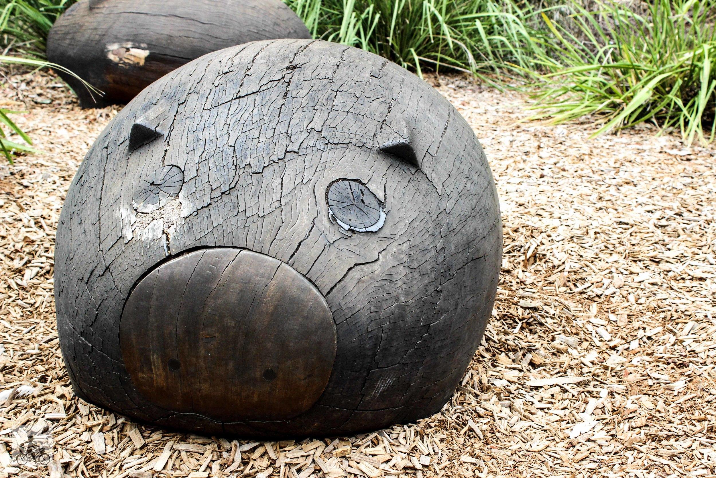 Wombat Bend  (3 of 34).jpg