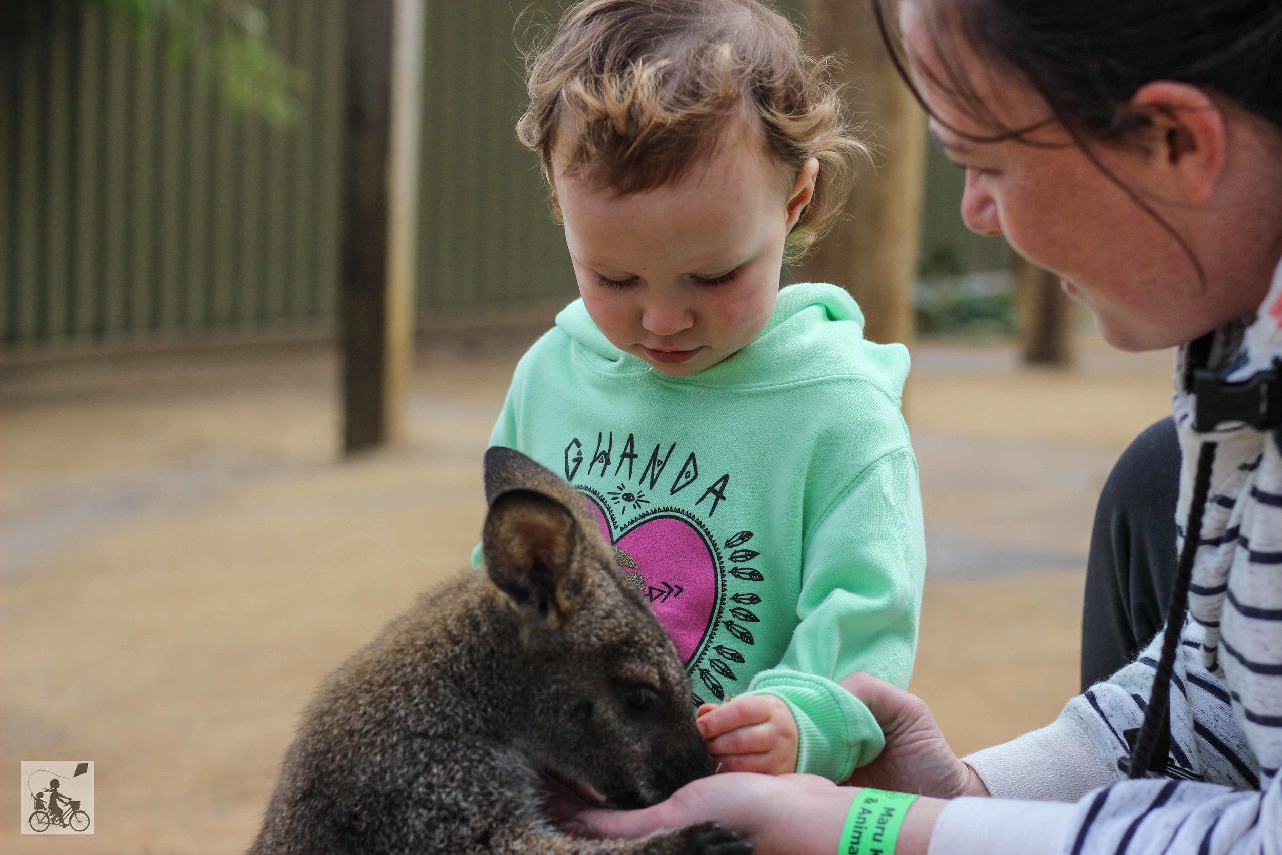 Mamma Knows East - Maru koala