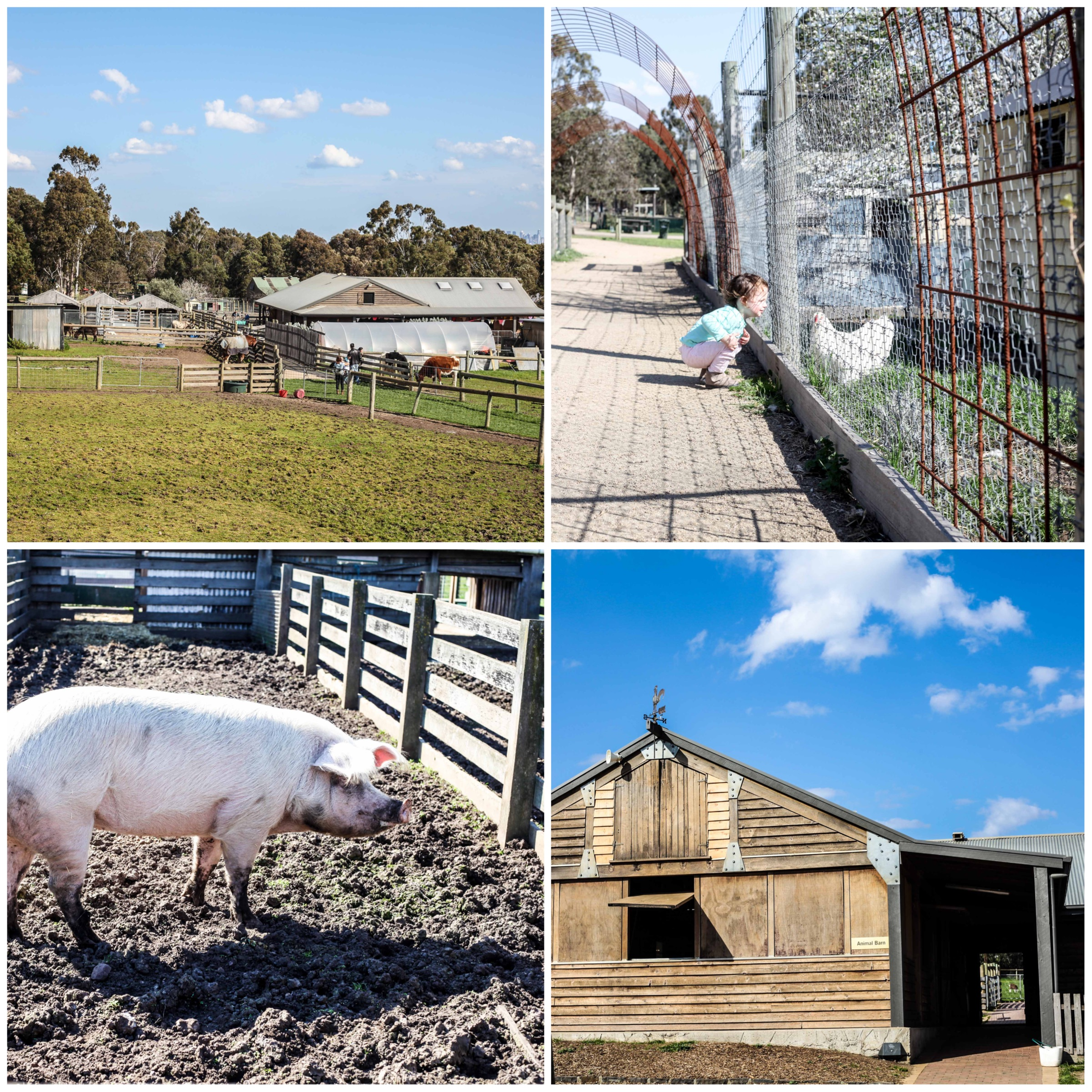 Mamma Knows East - Bundoora Park Farm