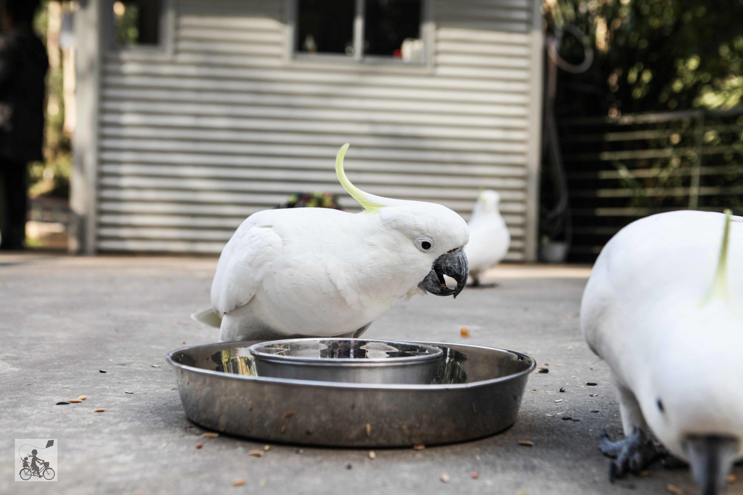 Mamma Knows East - Grants Picnic Ground Bird Feeding Kallista