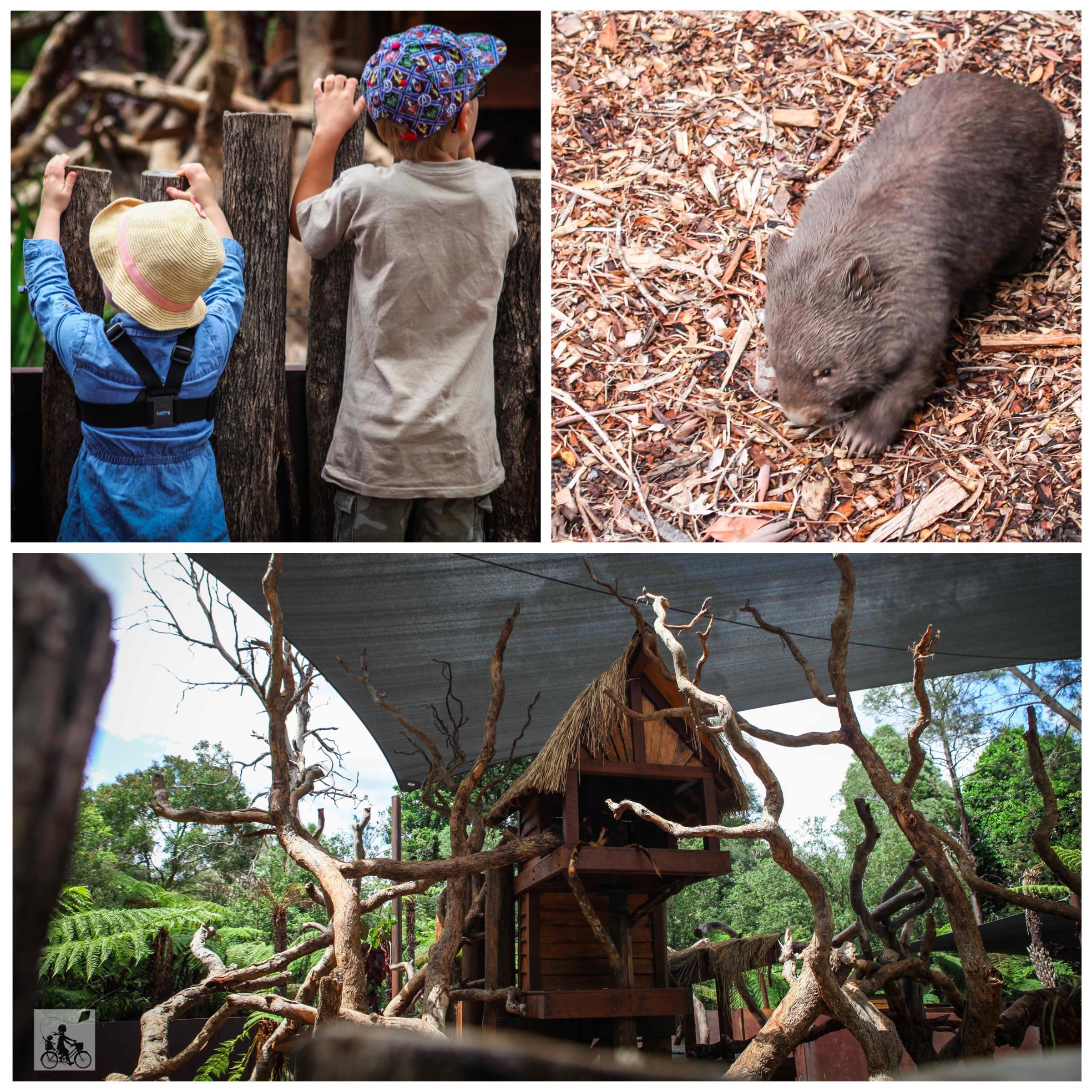 Mamma Knows East - Healesville Sanctuary Kangaroo Country 3.jpg