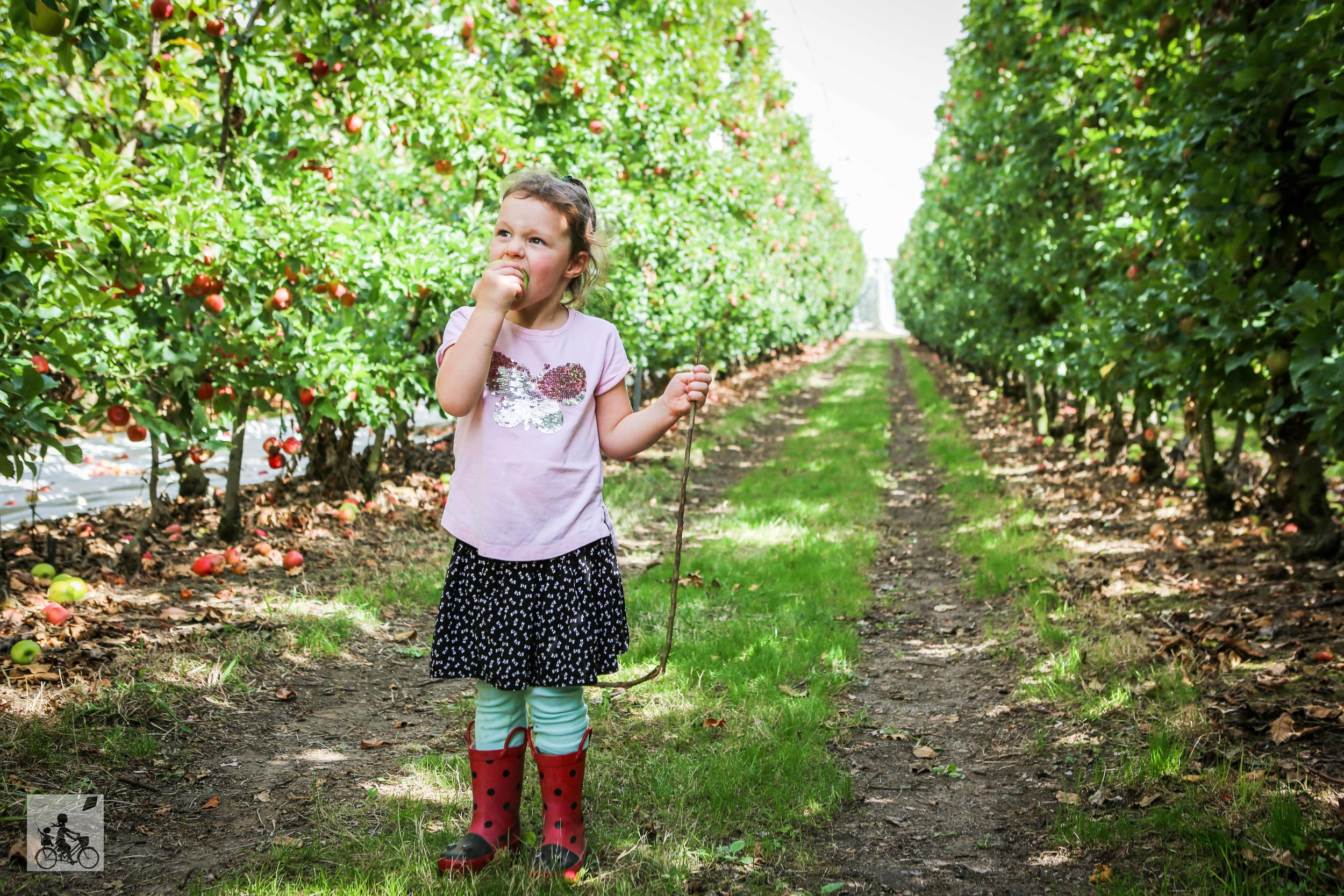 Mamma Knows East - Sanders Apples (30 of 40).jpg