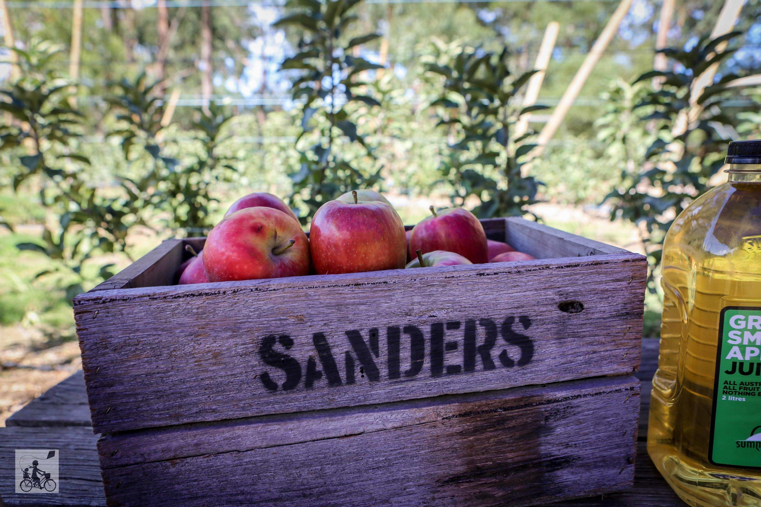 Mamma Knows East - Sanders Apples (39 of 40).jpg