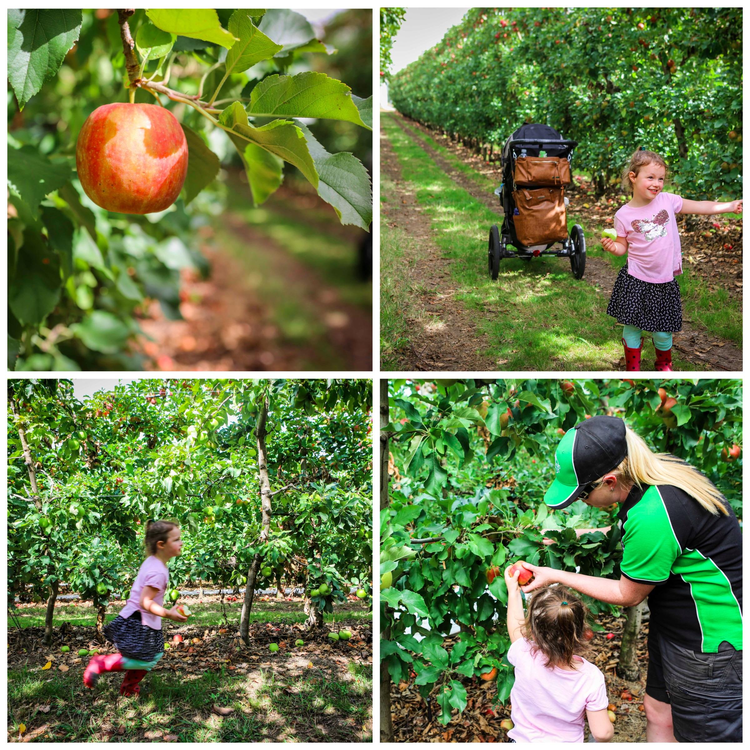 02 Mamma Knows East - Sanders Apples (1 of 40).jpg