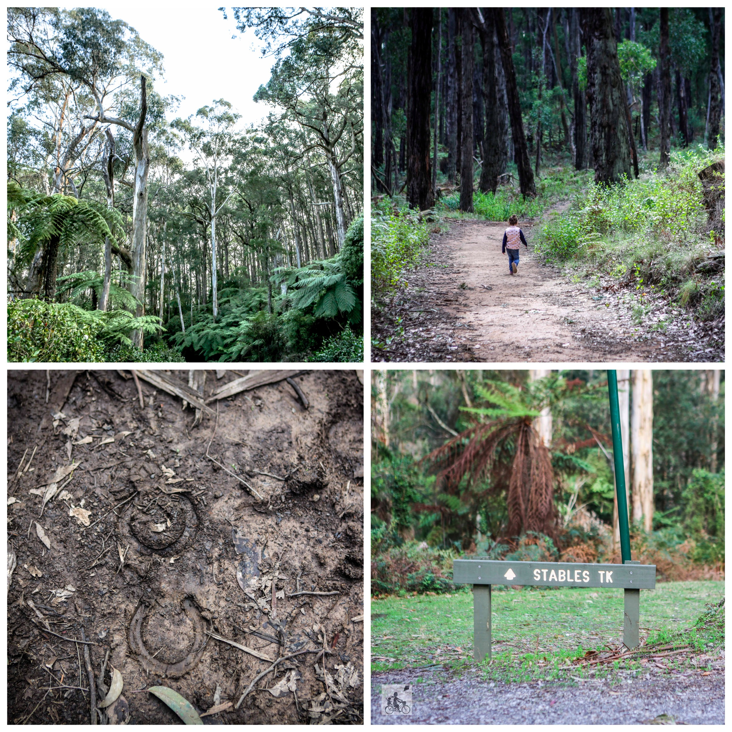 03 Doongalla Forest - Mamma Knows East (1 of 64).jpg