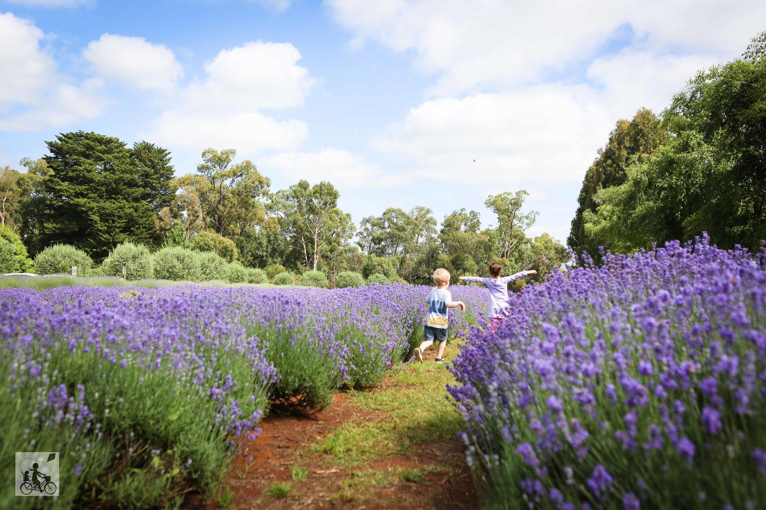 Warratina Lavender Farm Wandin - Mamma Knows East (48 of 62).jpg