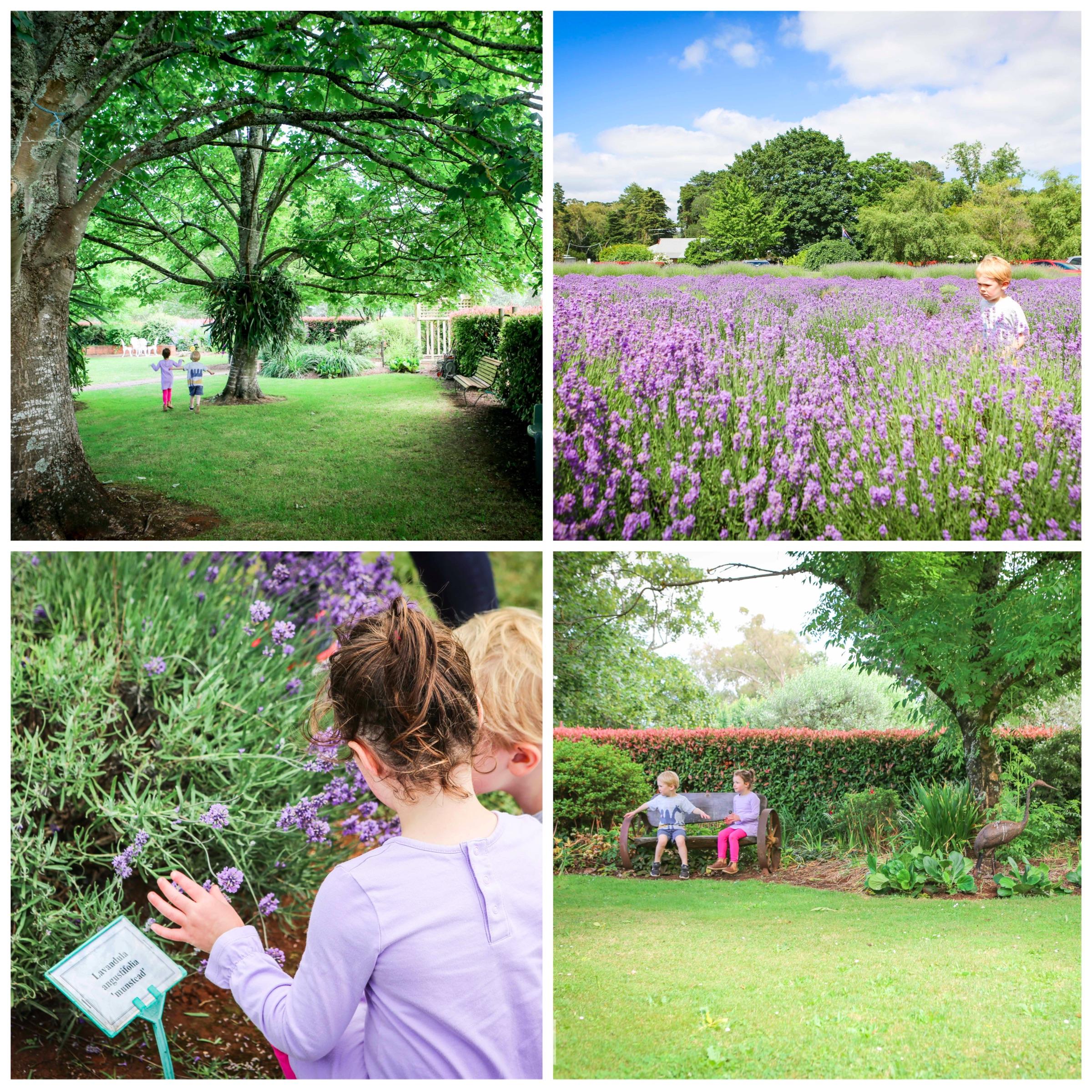 02 Warratina Lavender Farm Wandin - Mamma Knows East (1 of 62).jpg