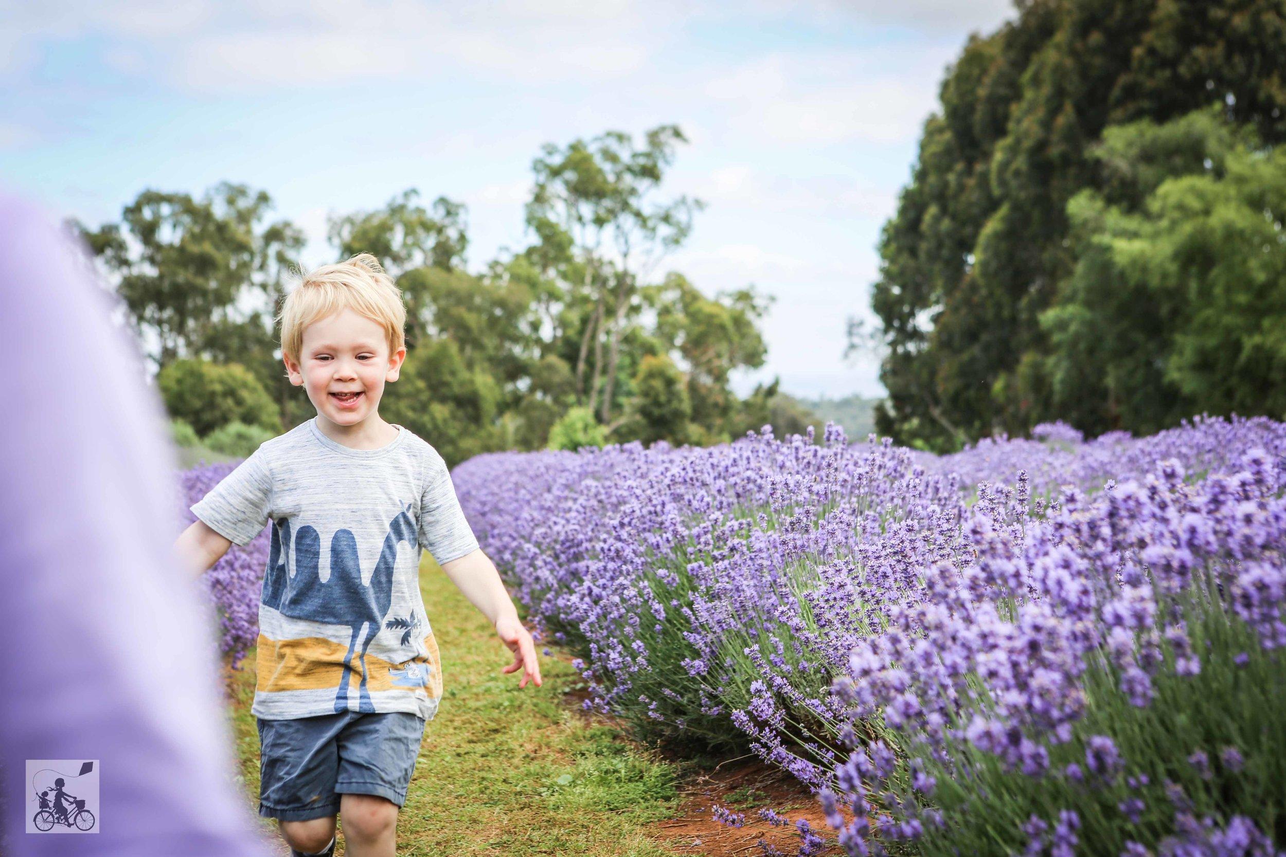 Warratina Lavender Farm Wandin - Mamma Knows East (9 of 62).jpg