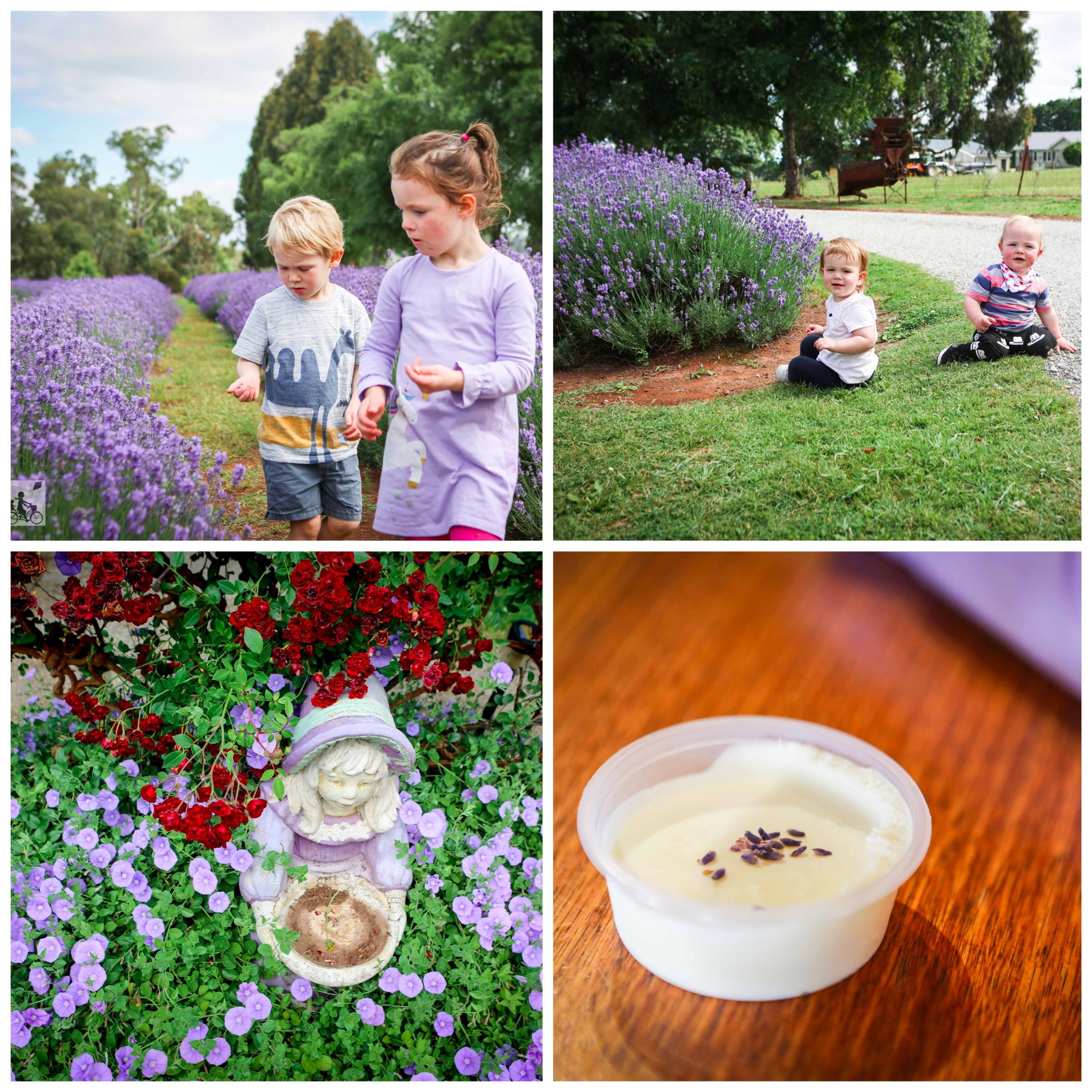 03 Warratina Lavender Farm Wandin - Mamma Knows East (1 of 62).jpg