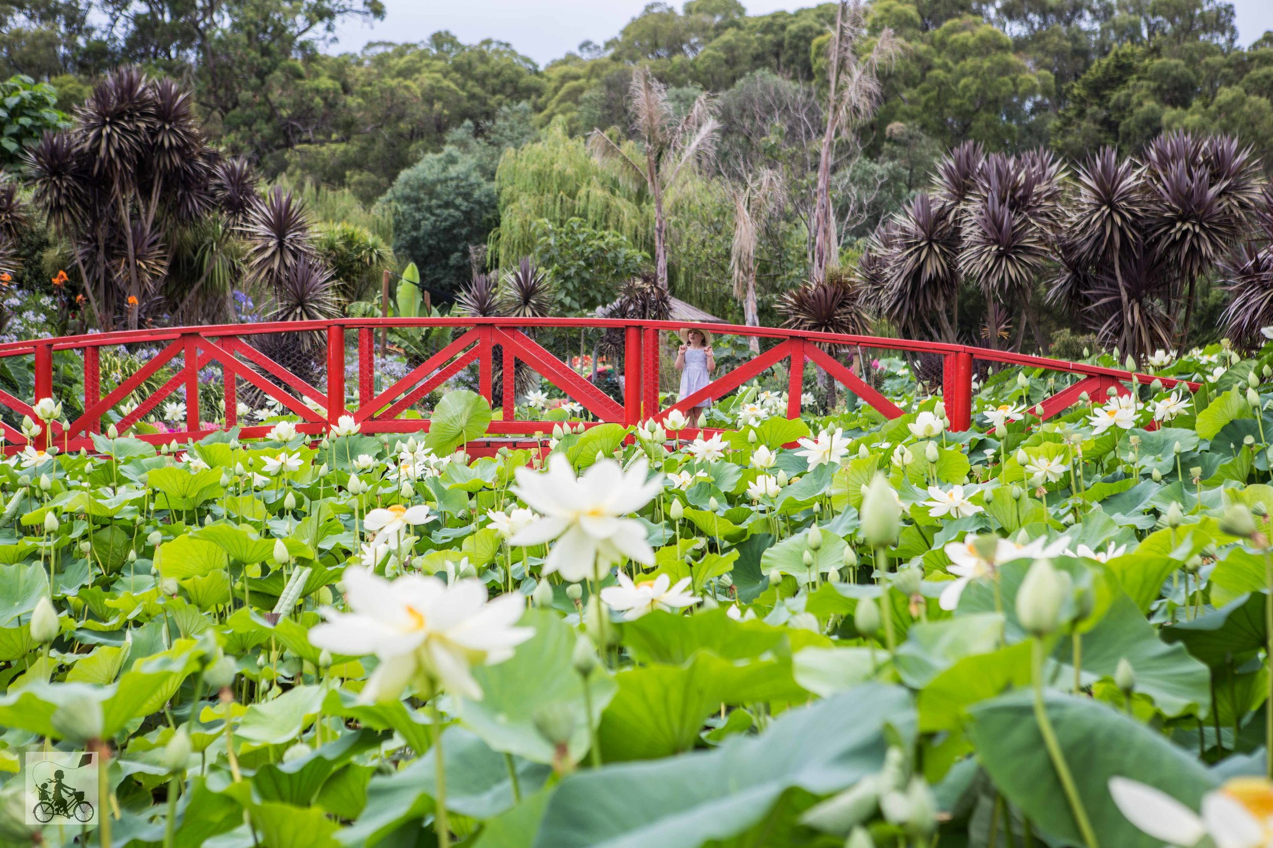 Blue Lotus Water Gardens 2019 - Mamma Knows East (42 of 74).jpg