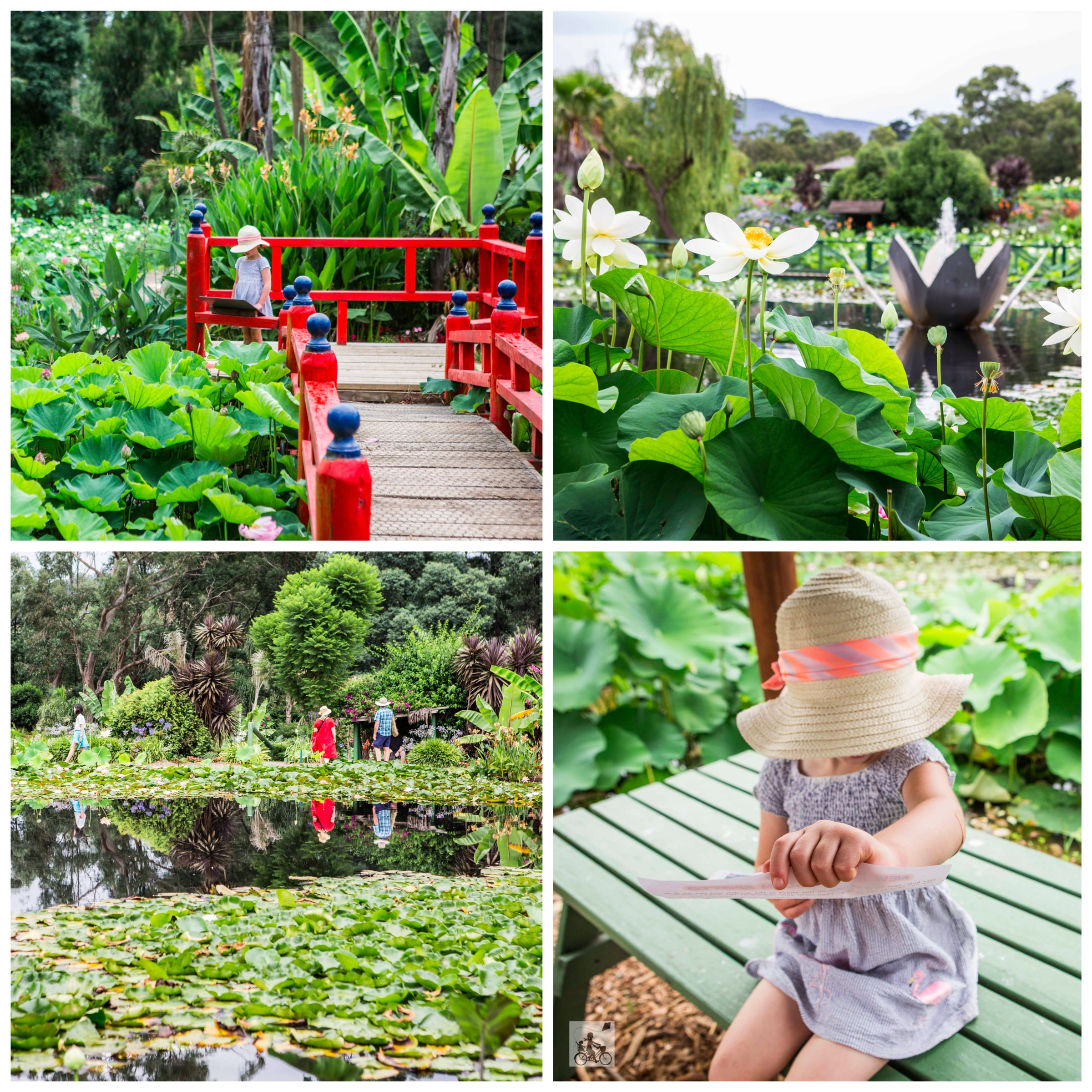 21 Blue Lotus Water Gardens 2019 - Mamma Knows East (1 of 74).jpg