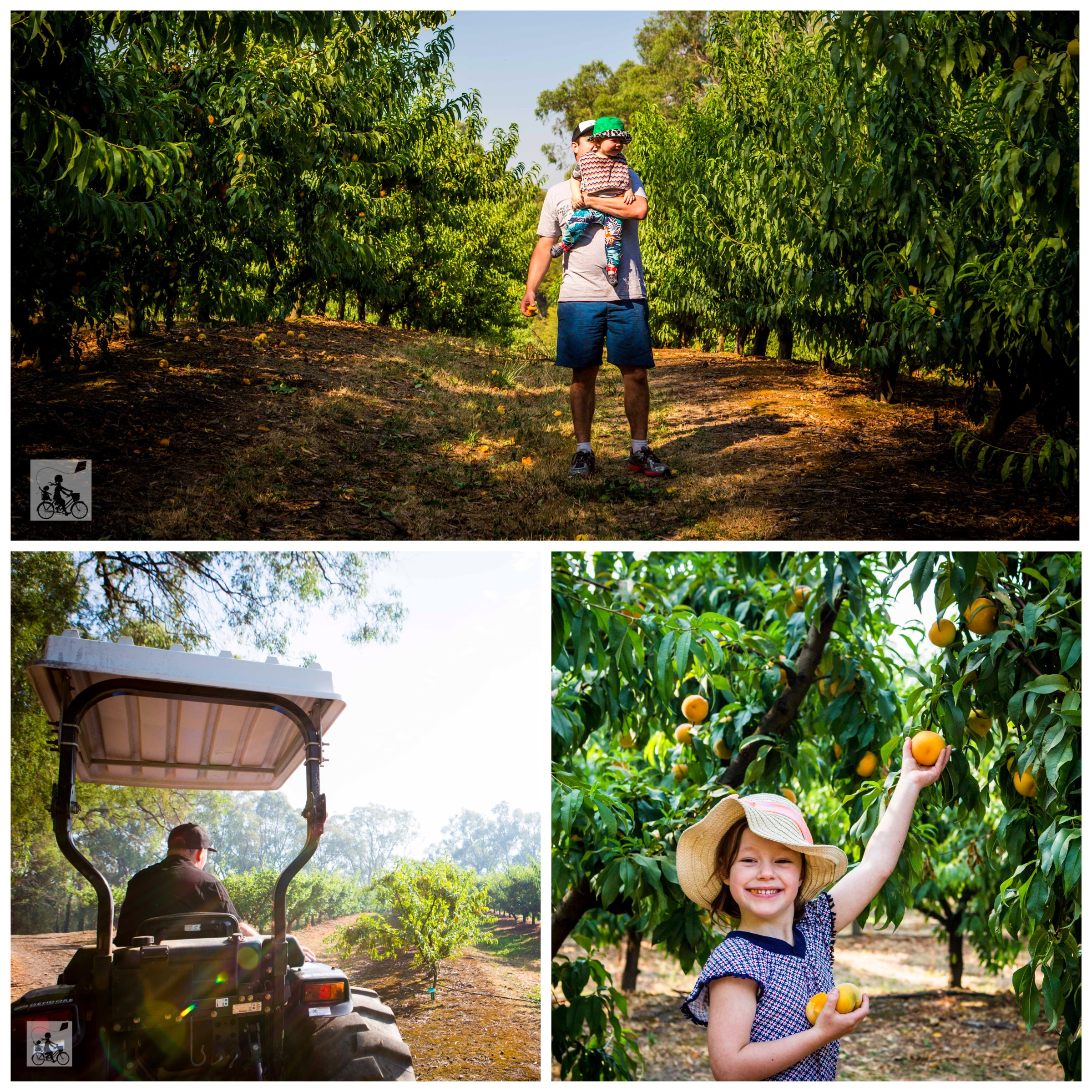 01 Rayners Orchard - Mamma Knows East (1 of 44).jpg