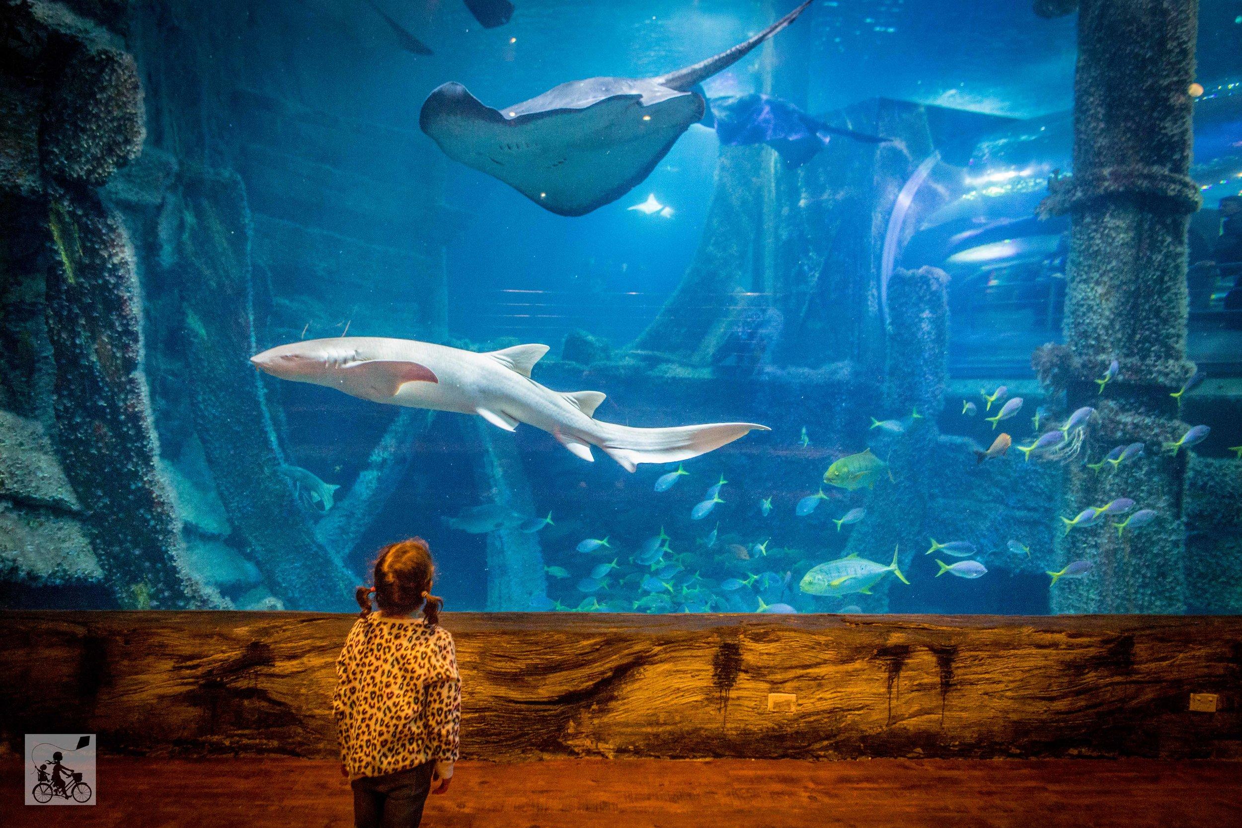 Sealife Aquarium - Mamma Knows East (16 of 52).jpg