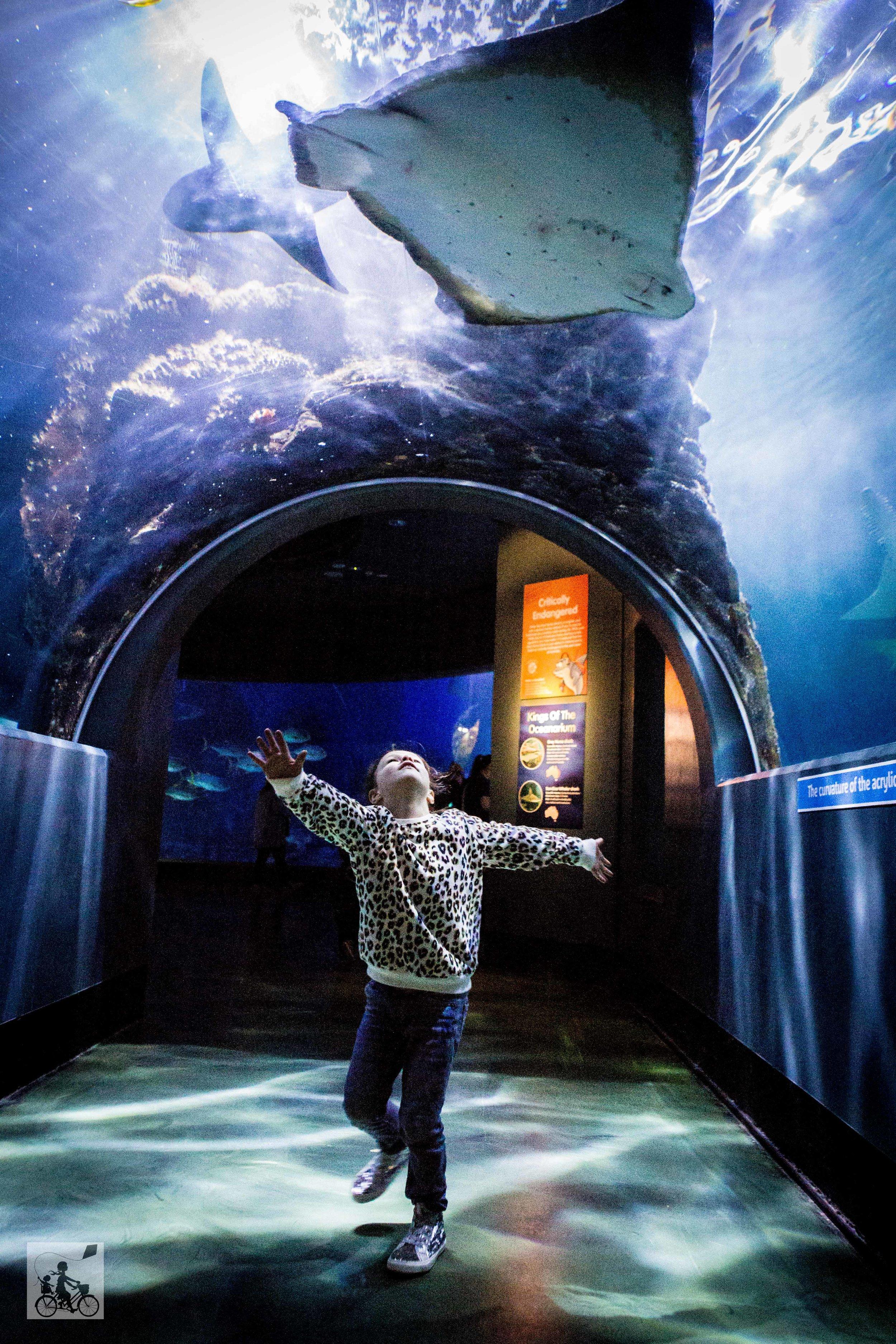 Sealife Aquarium - Mamma Knows East (23 of 52).jpg