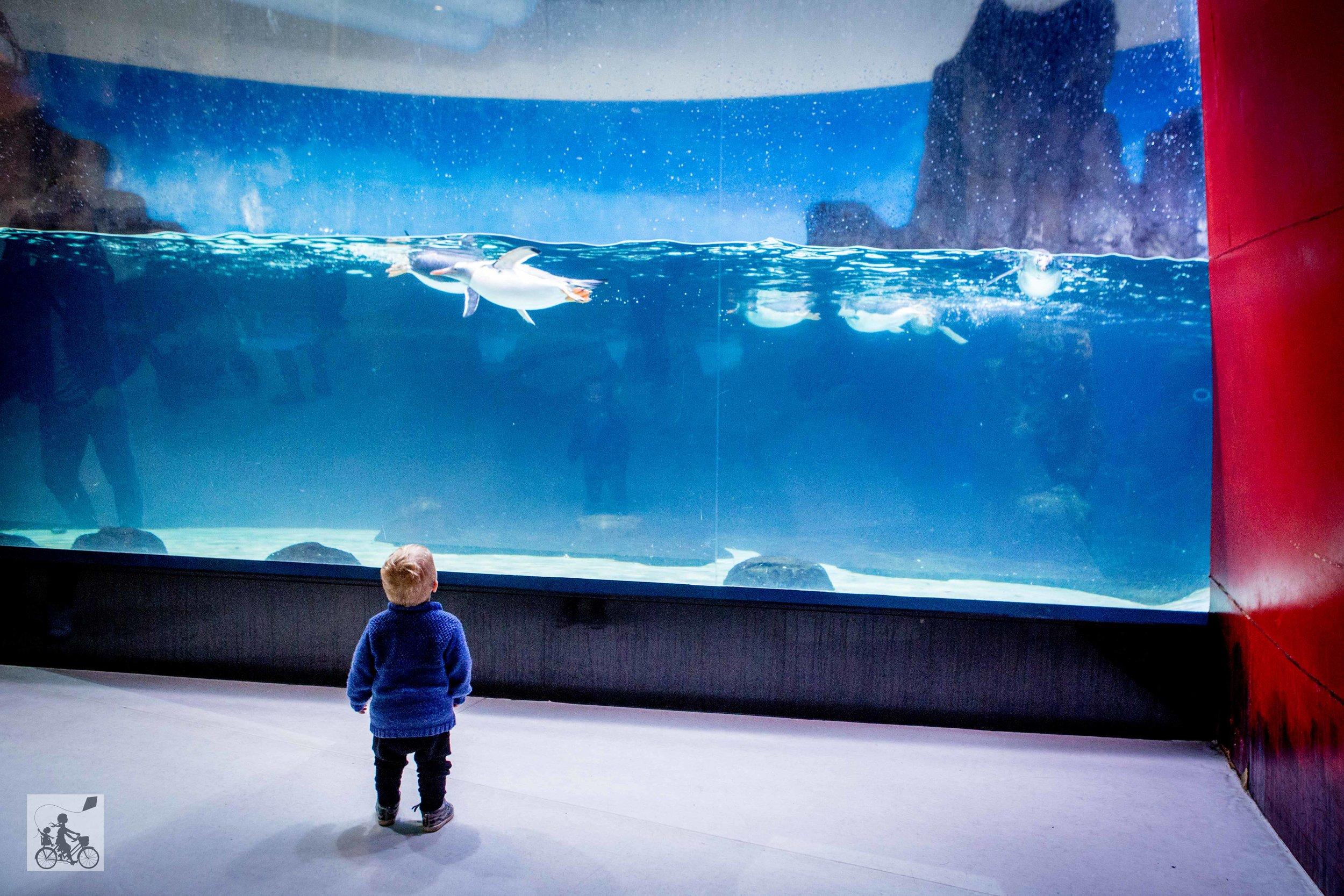 Sealife Aquarium - Mamma Knows East (44 of 52).jpg