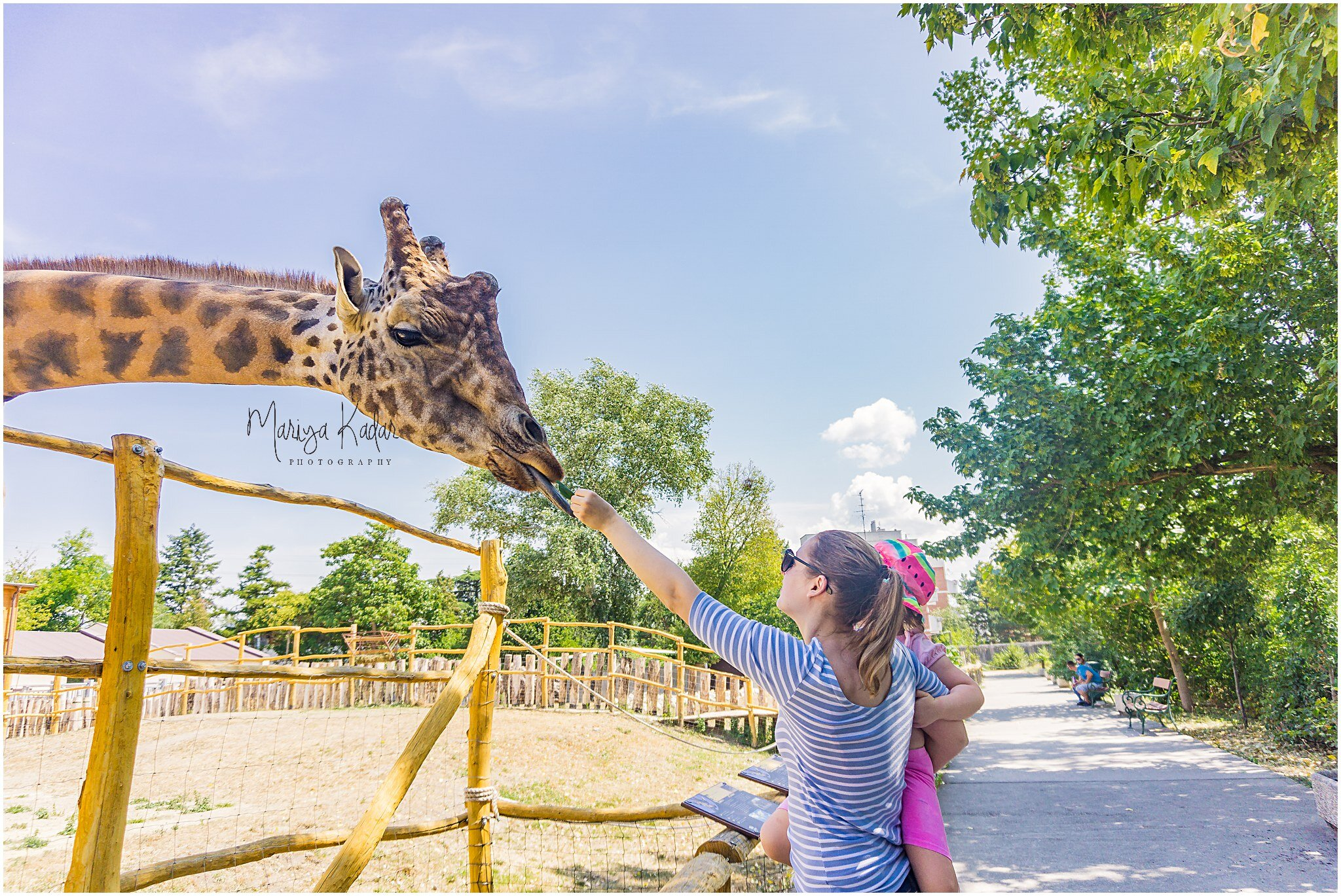 feeding-giraffe.jpg