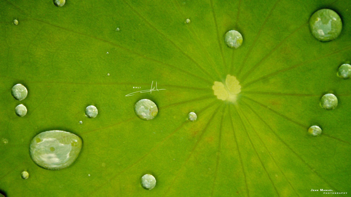Green036.jpg