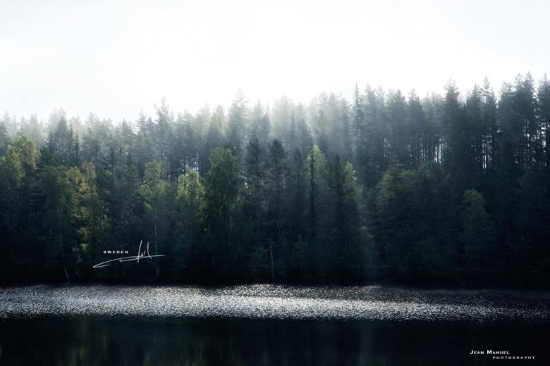 JMP-trees4.jpg