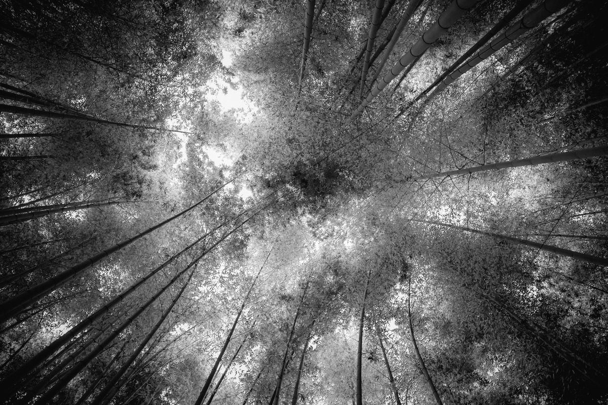 bambooforrestjapan