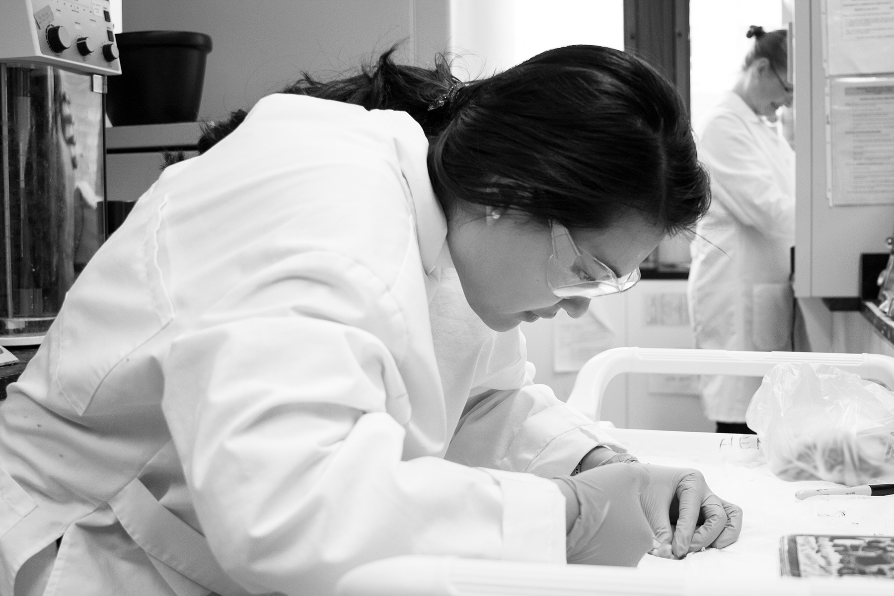 Meghin removing the brains of a mouse specimen.