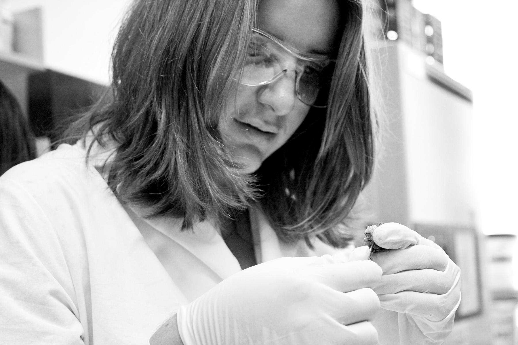 Vanessa harvests brain tissue from the specimen.
