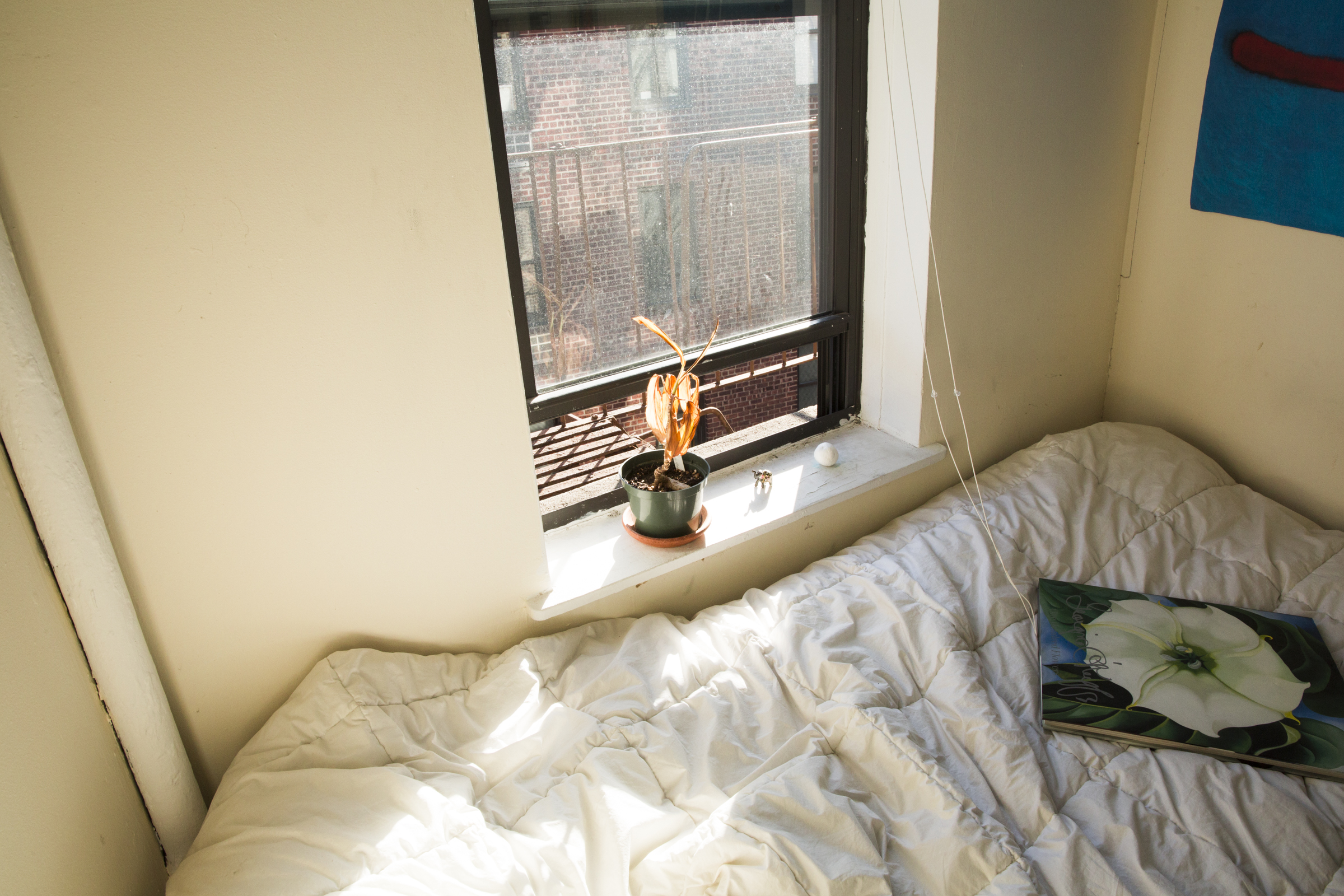 Aaron's room in the afternoon sunlight.