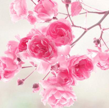 4225382-wallpapers-of-flowers copy.jpg