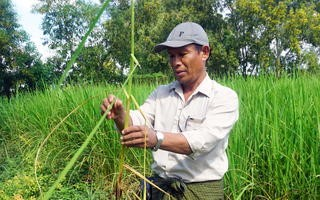 Kyaw Shwe demonstrates how agri-mobile apps have helped in farming his rice fields. (Photo by Denis D. Gray)