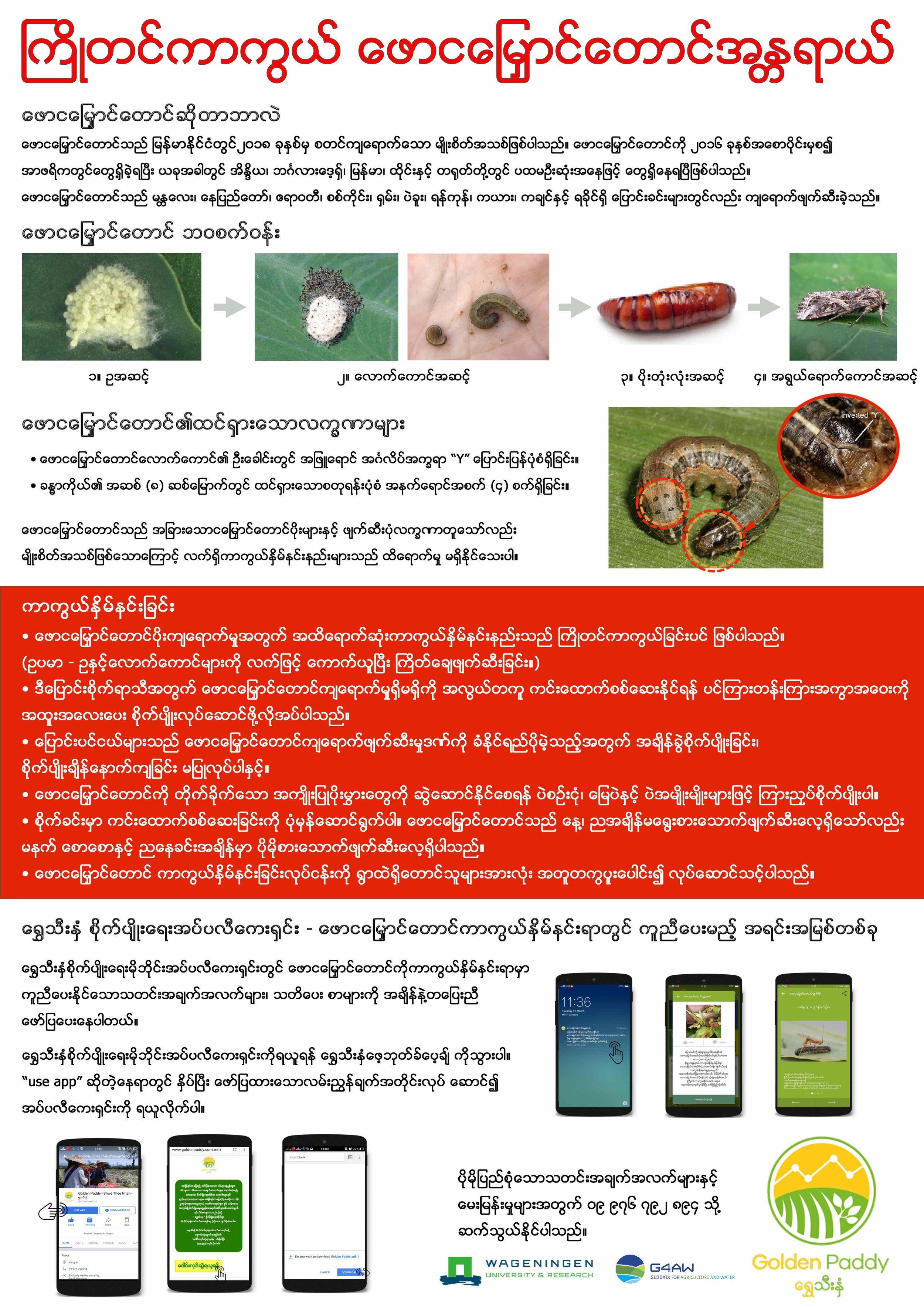 Fall Armyworm Burmese.jpg