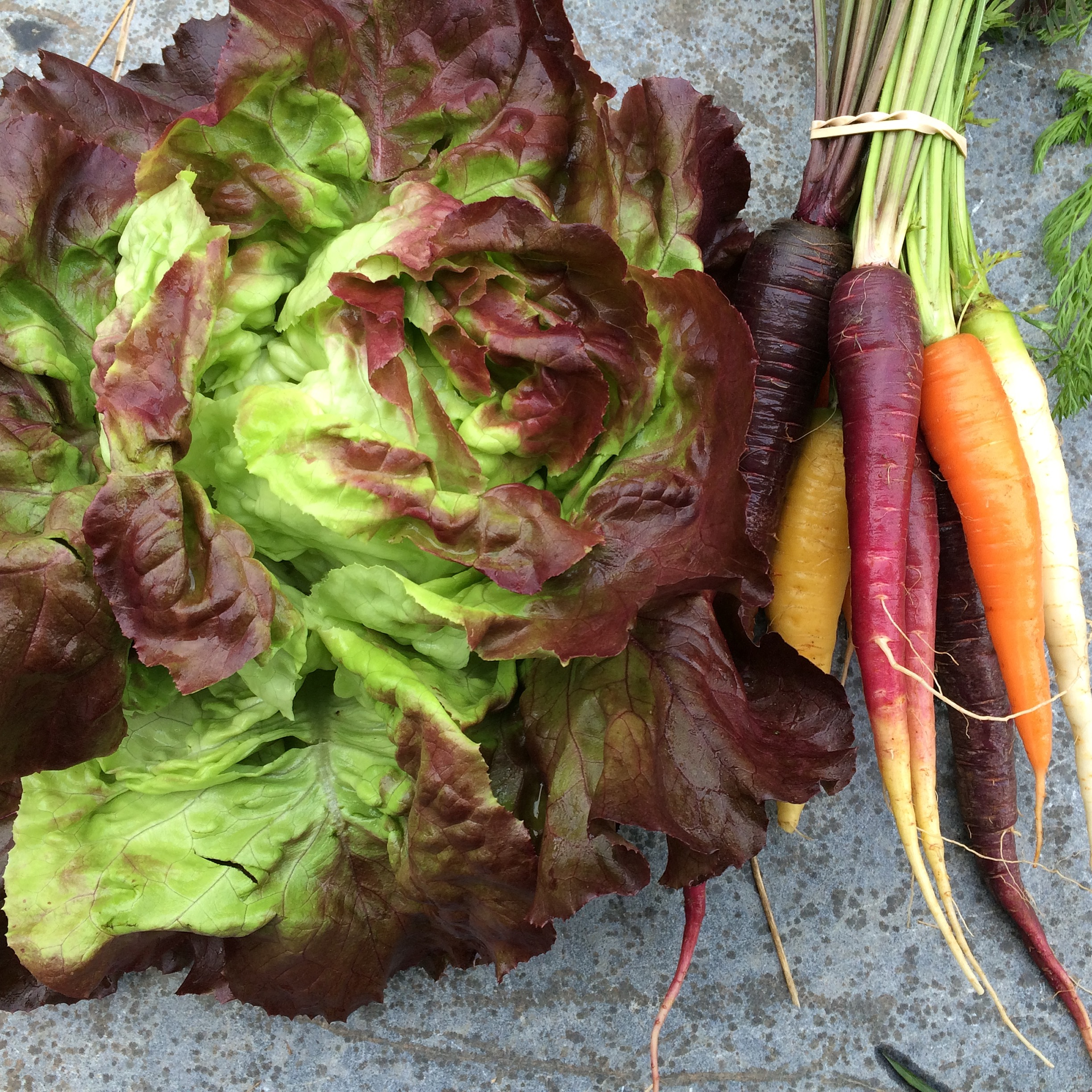 Our beautiful, crunchy red butterhead lettuce and rainbow carrots