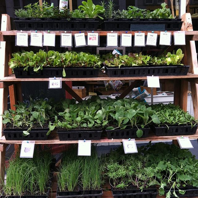 First plants delivered to the @rutlandcoop!