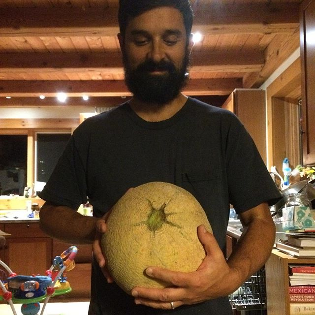 This is what a 10.4 lb cantaloupe looks like!!!!