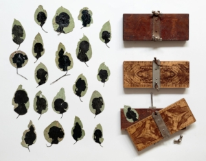 5 From the bower , Loris Button, Deborah Klein, Louise Saxton and Carole Wilson    Eucalyptus leaves, 2015 –16 , handpainted with Indian ink, acrylic paint and pigment markers, dimensions variable; flower presses: wood and metal, each 4 x 24 x 10cm (approx.); collection of Deborah Klein; image courtesy the artist; photo: Tim Gresham