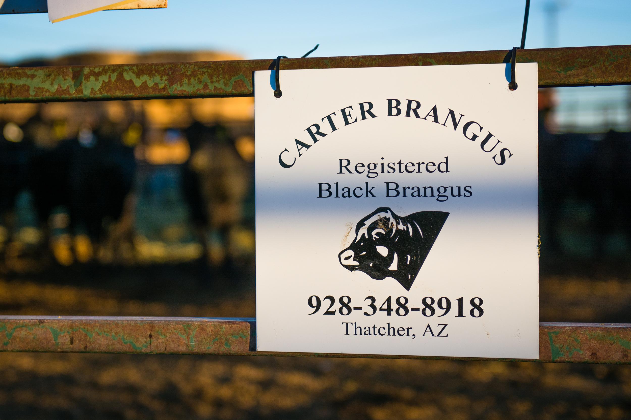 Carter Brangus-3.jpg
