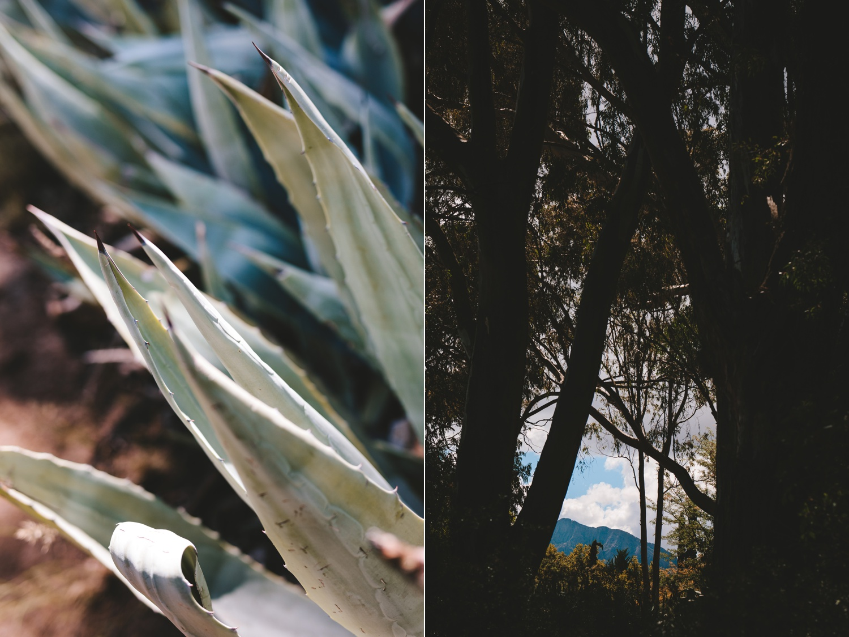 Jolynn_Dylan_weddingcharlie_ray_photography_nieu_bethesda_south_africa_karoo_filmmakers_forest_outdoor_reception_street_0207.jpg