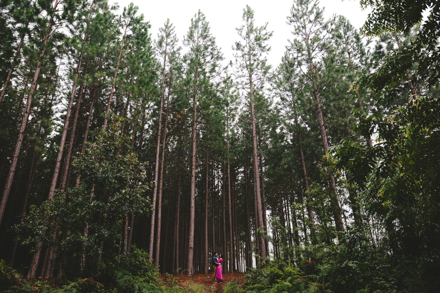 western_cape_tsitsikamma_storms_river_forest_ferns_stormy_couple_session_0721.jpg