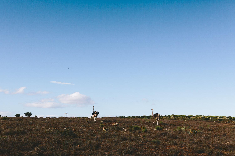 Eastern_Cape_Wedding_Photographer_kuier_bush_adventure2.jpg