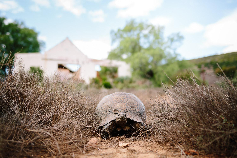 Eastern_Cape_Wedding_Photographer_kuier_bush_adventure5.jpg