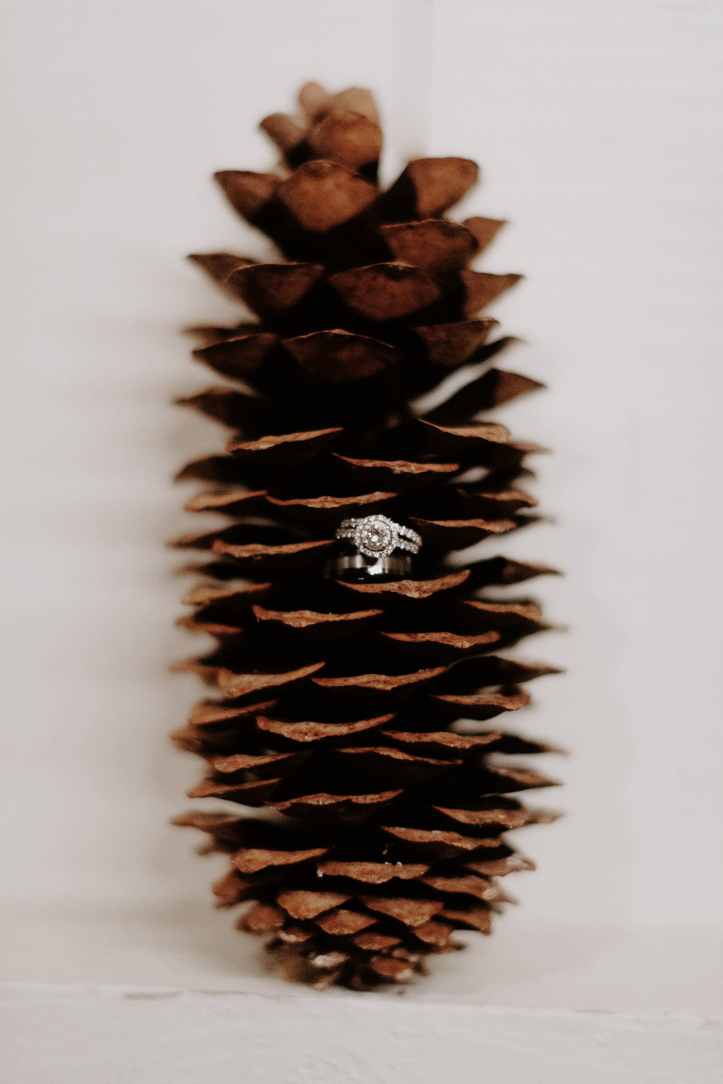 Wedding rings sitting on a pine cone