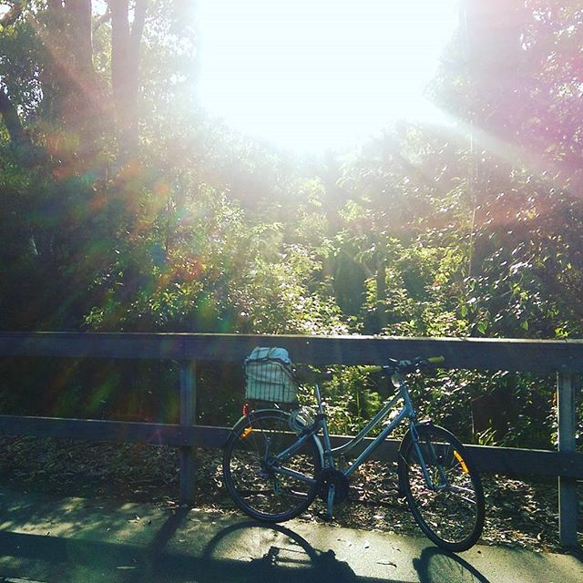 Beautiful #light on the #FernleighTrack  #thismorning! #cycling #sunshine #CSN4me