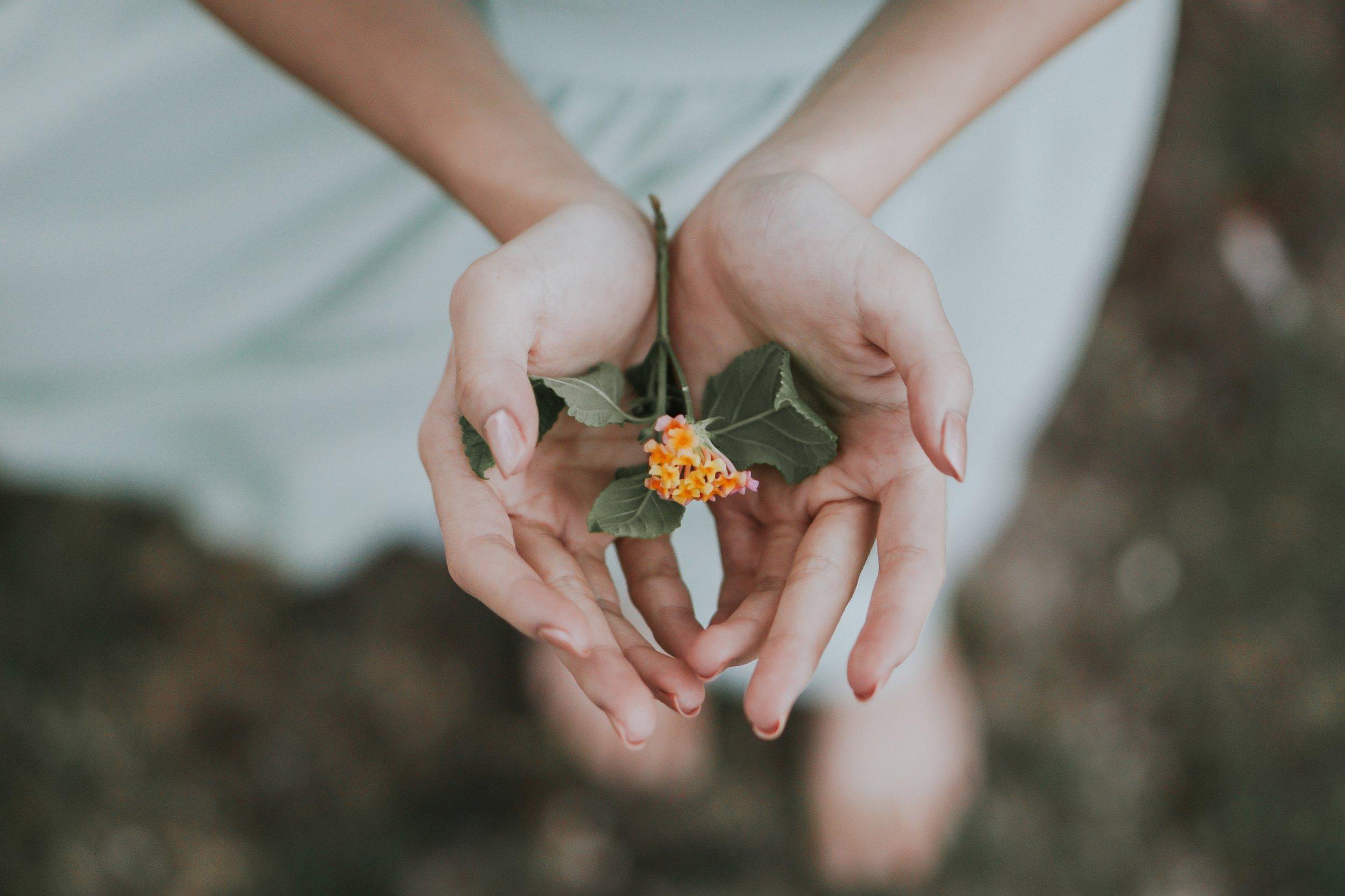 kathleen-farren-bach-flower.jpg