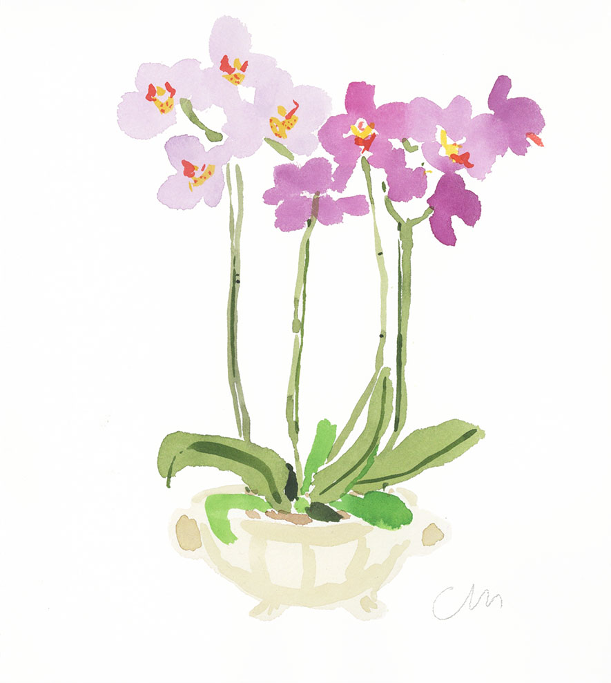 Tall Orchid