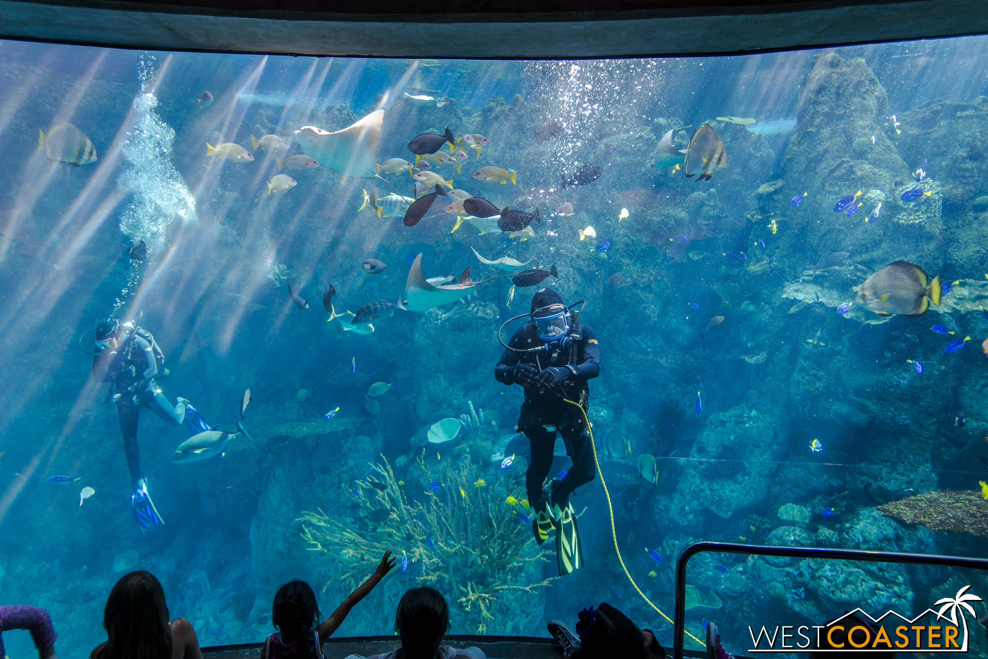 There are also educational shows featuring SCUBA divers teaching viewers about the oceans and species featured in this tank.