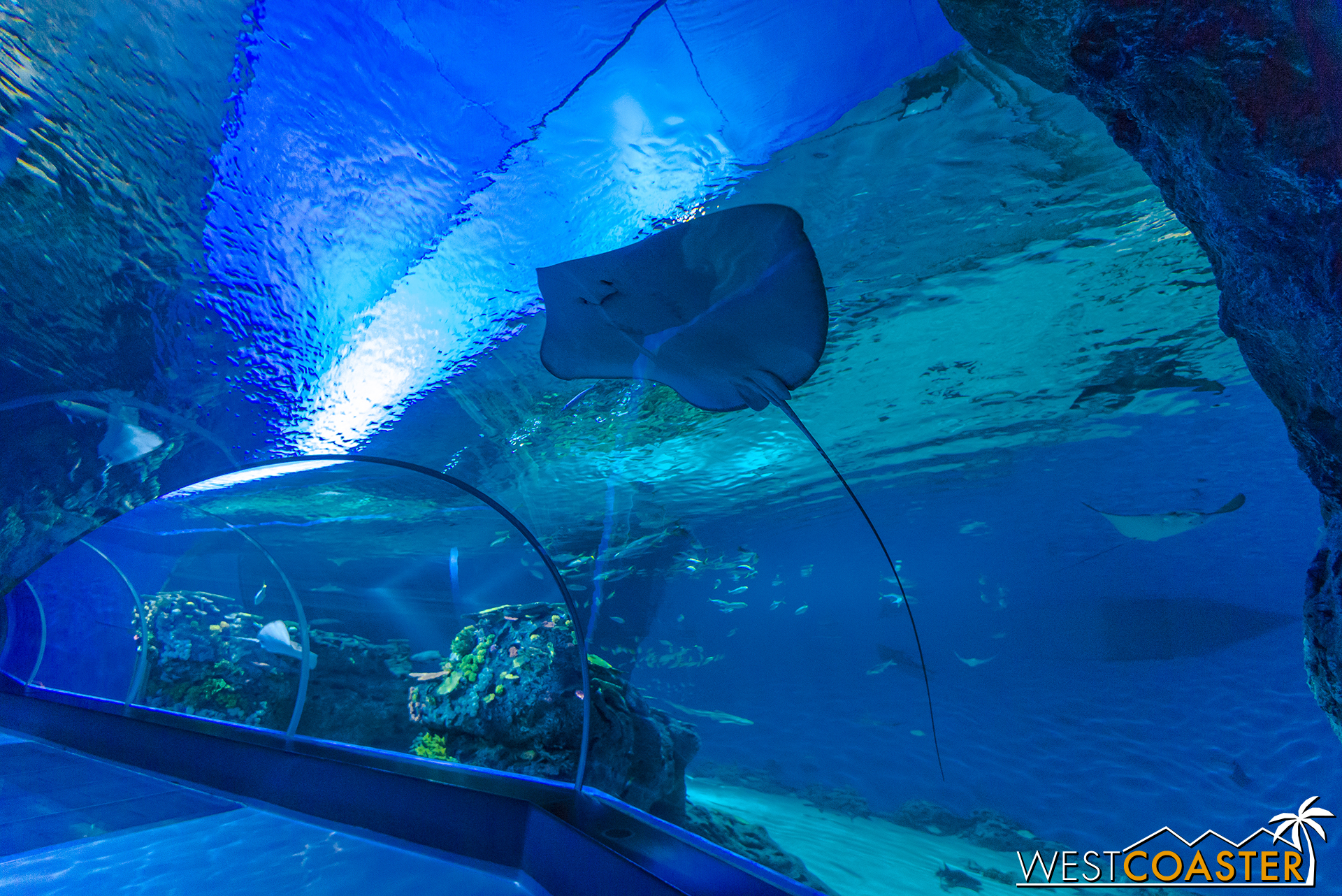 Den Blå Planet is the largest aquarium in Northern Europe and features a wide collection marine life.