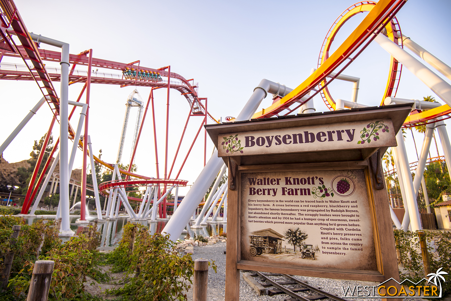 Over at Silver Bullet, they've planted some boysenberry vines.