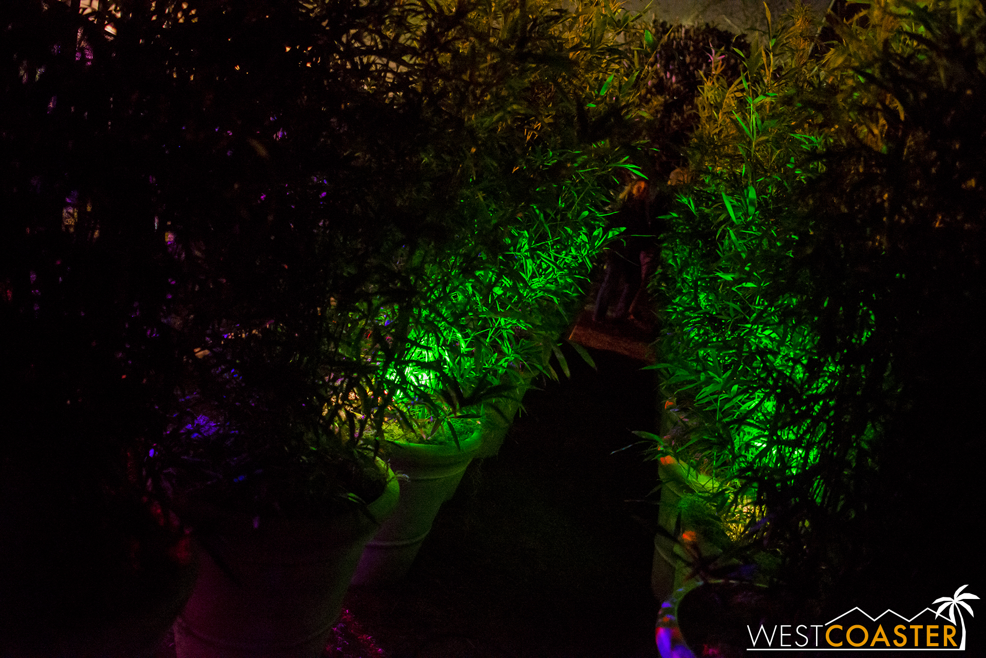 And so, onward guests marched, past this spooky shrubbery. #SpookyShrubbery
