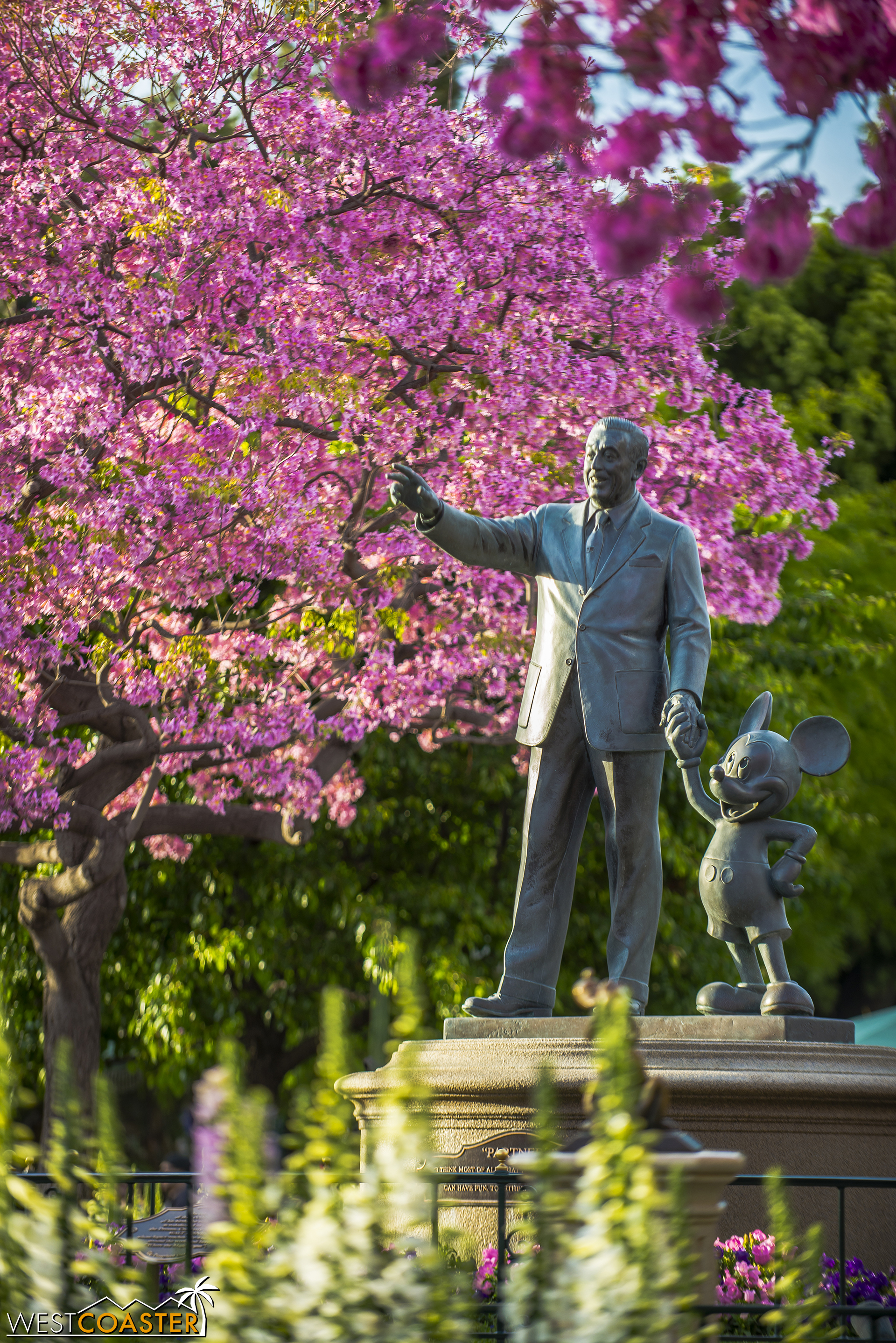 The tabebuias over at The Hub in Disneyland have also started turning their beautiful springtime pink, which is pretty fantastic.